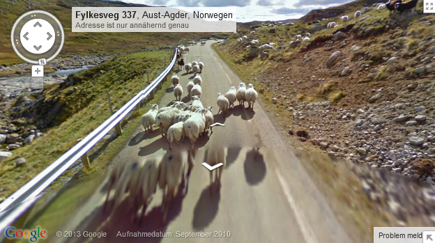 Schafe in Norwegen<br><br>